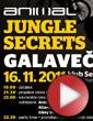 Animal Jungle Secrets 2011 - finále