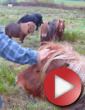 Video: The Dudes of Hazzard Episode 7