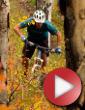 Video: Peak Season