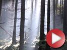 Video: Petr Leták - Cycle