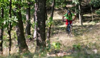 Video: Jen tak v lese