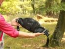 Test: Ace Pac Lumbar Pack - nenápadná ledvinka, která se dá skrýt pod dres