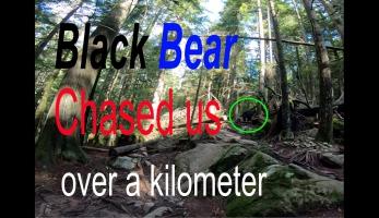 Video: s medvědem na dráze
